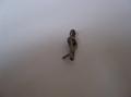 Boley No.6 Drive Dog [B6DD]
